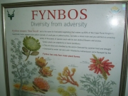 Information about local fynbos